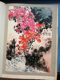中国名贵花卉    中、西班牙  文