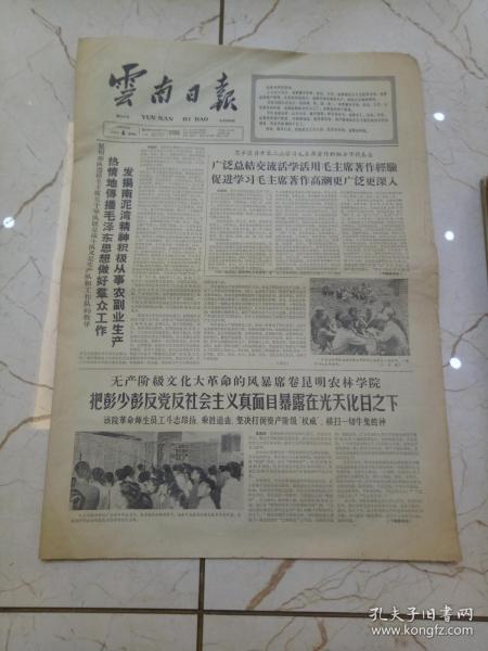 云南日报1966年8月