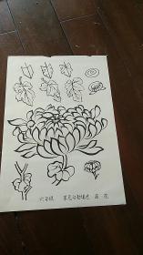 宣传画 8开 《墨笔勾勒填色 菊花》