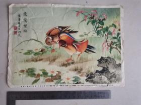135 鸳鸯画片 50年代