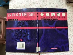 骨细胞图谱与骨细胞体外培养技术