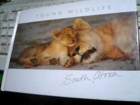 YOUNG WILDLIFE年轻的野生动物