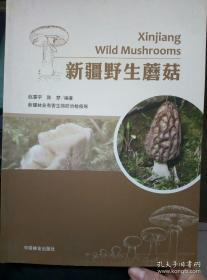 新疆野生蘑菇