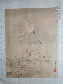 老朵云轩木版水印 《新罗山人翎毛画册》之 天鹅  绢本