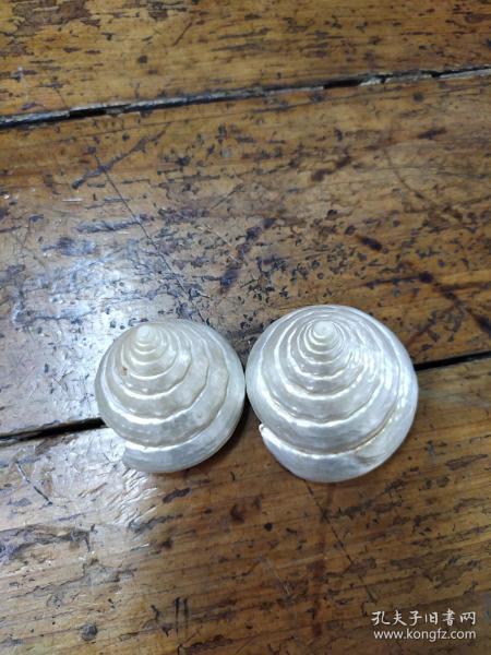 工地出品——六朝貝螺殼——兩個合售