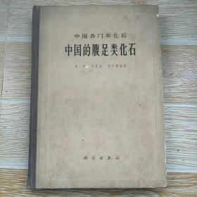 中国各门类化石--中国的腹足类化石【实物拍图】