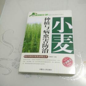 小麦种植与病虫害防治