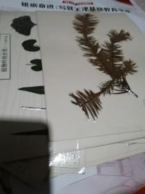 植物标本29张