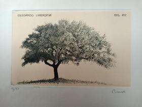 意大利Tonelli Roberta铜版蚀刻藏书票《大树》