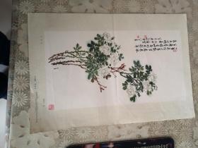 月季花( 陈半丁 作   上海人民美术1957年出版)一版一印,印数22500