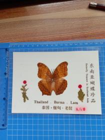 东南亚蝴蝶珍品 风凡蝶