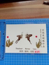 东南亚蝴蝶珍品 燕尾蝶