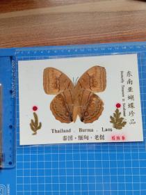东南亚蝴蝶珍品 维纳斯.