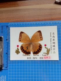 东南亚蝴蝶珍品