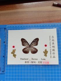 东南亚蝴蝶珍品 小青蝶