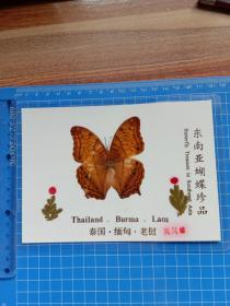 东南亚蝴蝶珍品 风凡蝶.