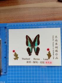 东南亚蝴蝶珍品 绿凤蝶