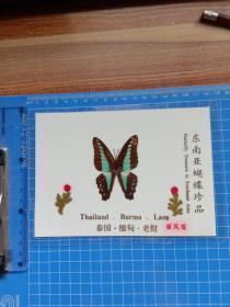东南亚蝴蝶珍品 绿凤蝶.