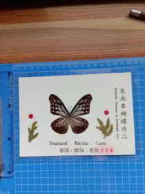 东南亚蝴蝶珍品 小青蝶.