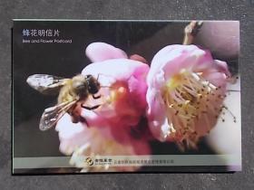 蜂花明信片,沈安波摄影,32开,12枚