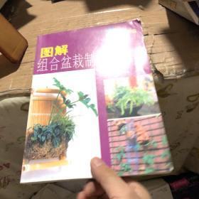 图解组合盆栽制作与观赏
