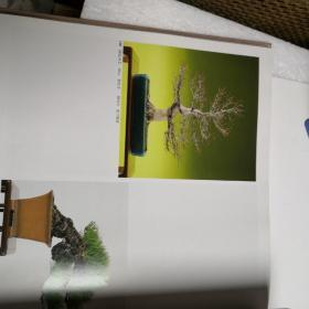 东海盆栽名品展第十二回