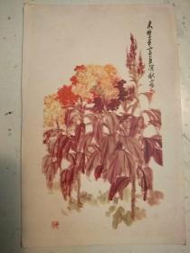 210。老画片1958年。鸡冠花。来楚生作。上海人民美术出版社。15*9.5cm