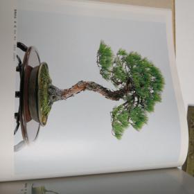 东海盆栽名品展第十六回
