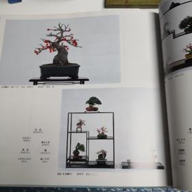 东海盆栽名品展第八回