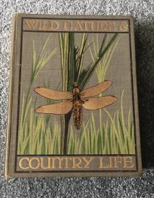 Wild Nature & Country Life Hodder and Stoughton Edwardian c1910 Art Nouveau Book