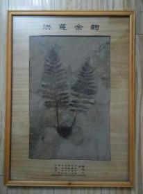 蕨类植物化石