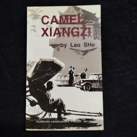 近全新 Camel Xiangzi《骆驼祥子》 老舍名著 ) 精美插图,英文版(货号67)