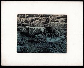 [N-24]佚名套色版画《牛》原作/纸张25X20厘米(版画15X12厘米)。