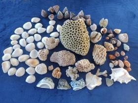 海南岛西海岸《大海贝壳、海螺、珊瑚石及海捞青花瓷片》共一批86个