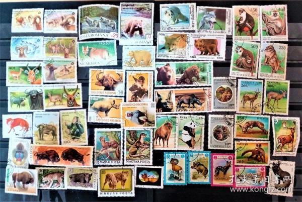 50枚外国各种野生动物专题邮票,票面精美,无重复!请注意图片及说明