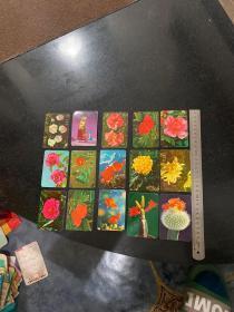 1975年历片15张 花卉等等