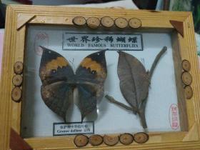 世界珍稀蝴蝶