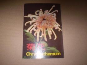 菊花(1套10张)明信片