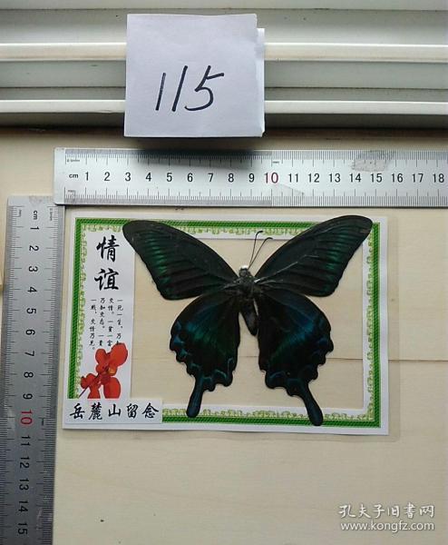 蝴蝶标本(岳麓山留念)