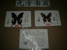 塑封蝴蝶标本 7张 (云南大理蝴蝶泉公园留念)
