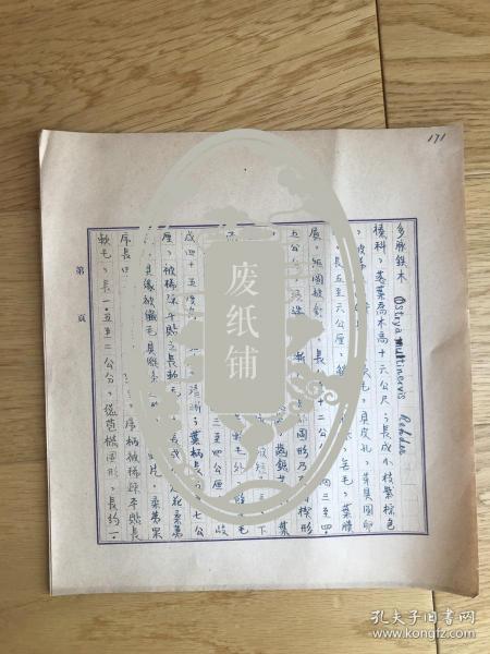 静生生物调查所旧藏——佚名民国时期植物谱手稿《多脉铁木》2页