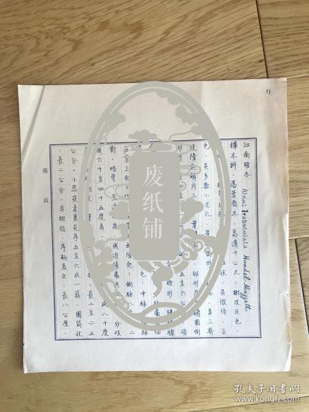 静生生物调查所旧藏——佚名民国时期植物谱手稿《江南桤木》2页
