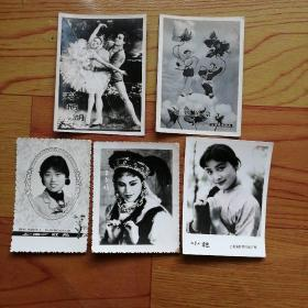 影星照片  卡片(5张)