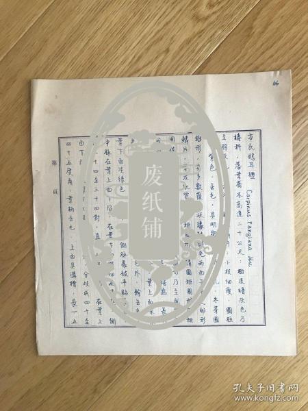 静生生物调查所旧藏——佚名民国时期植物谱手稿《方氏鹅耳枥》2页