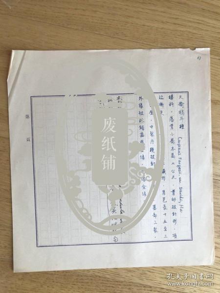 静生生物调查所旧藏——佚名民国时期植物谱手稿《大卫鹅耳枥》1页《大穗大卫鹅耳枥》1页