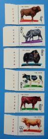 T63 畜牧业——牛 养牛带左厂铭(发行量178万套)
