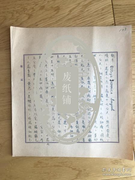 静生生物调查所旧藏——佚名民国时期植物谱手稿《铁木》2页