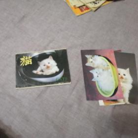 猫 明信片