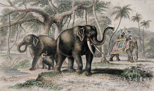 1866版《地球的自然史:动物图谱》—亚洲象/系列彩色雕版画/手工上色/25x16.5cm