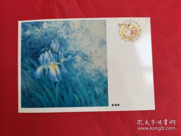 明信片:紫鸢尾